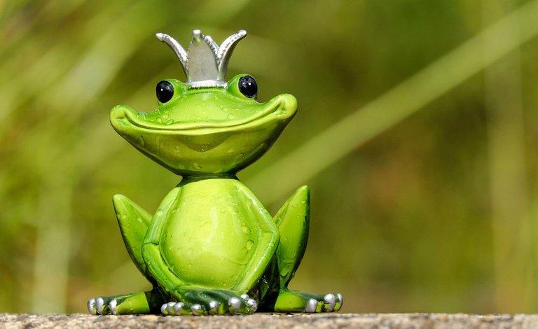 frog-2240764_1920.jpg