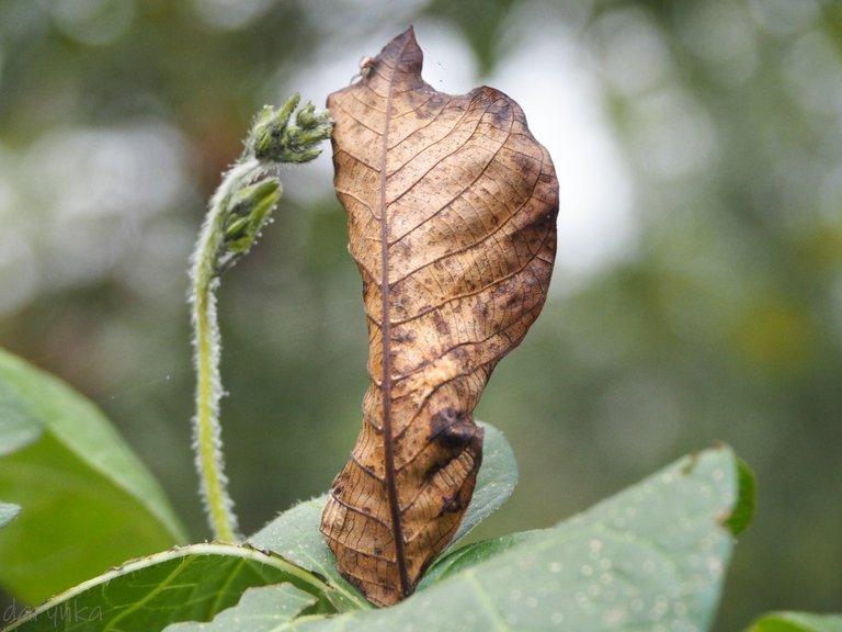 листок на берізці 1.jpg