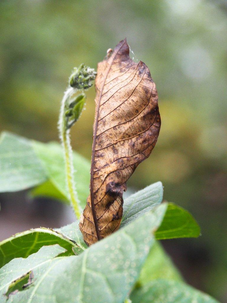 листок на берізці 2.jpg
