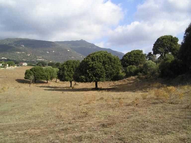 Korsika 2007 (95).JPG