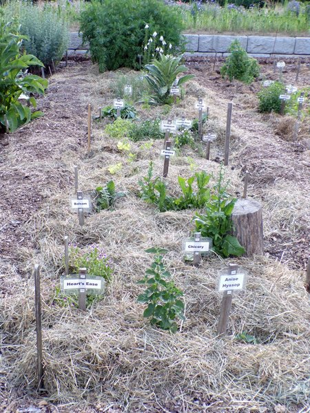 New Herb  Row 2, planted and mulched crop June 2020.jpg