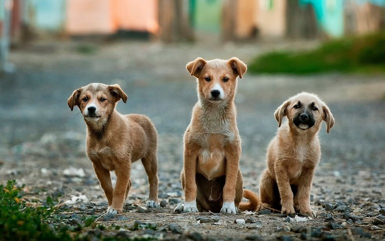 dogs-984015_1920.jpg