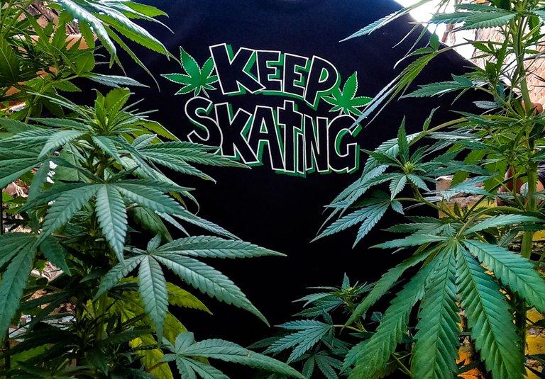 weed tshirt.jpg