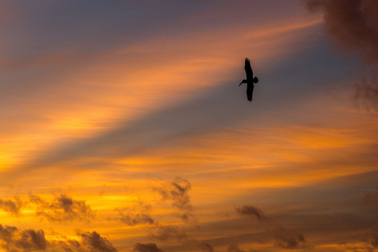 Morning Bird, Punta Cana II