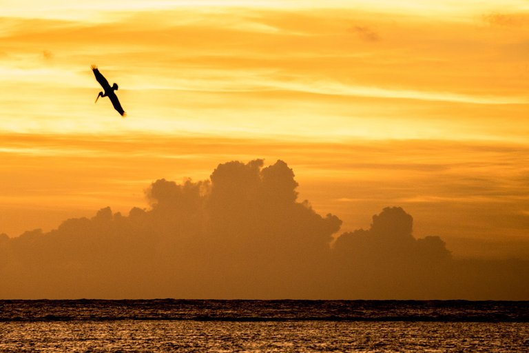 Morning bird, Punta Cana