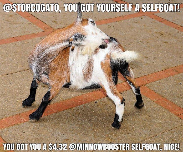 @storcogato got you a $4.32 @minnowbooster upgoat, nice!