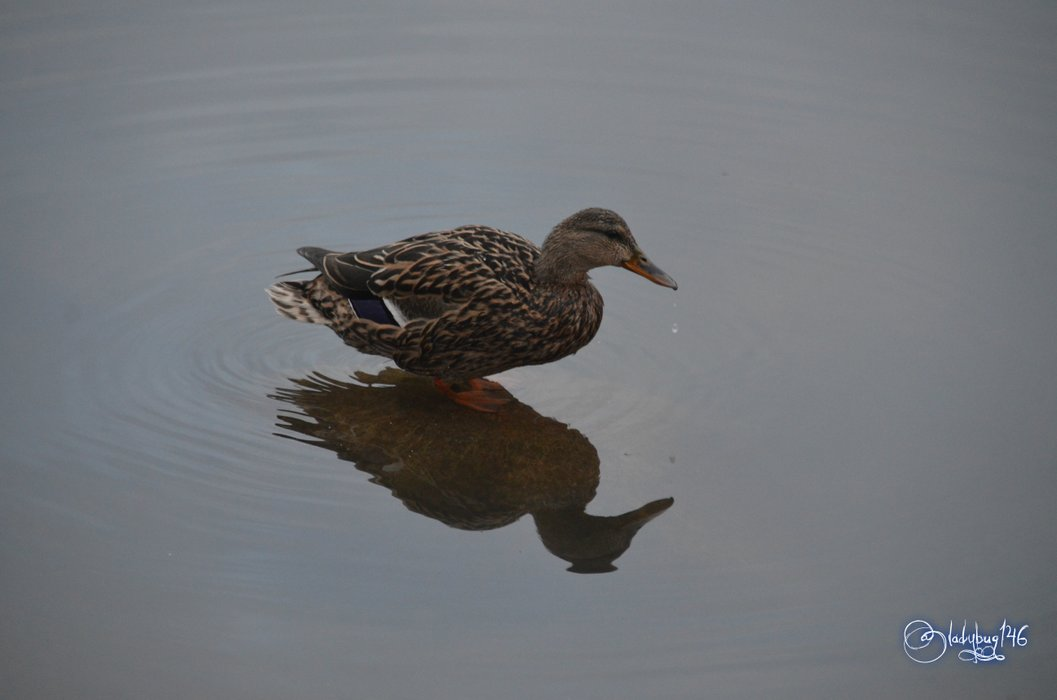 duck6.jpg