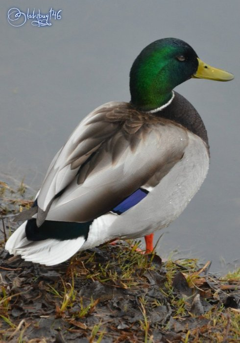 duck5.jpg