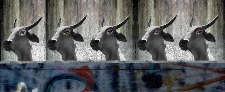 cabeza de vaca 2 14.jpg