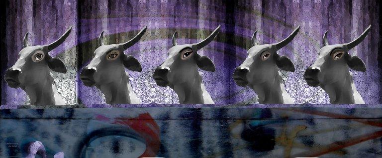 cabeza de vaca 2 15.jpg