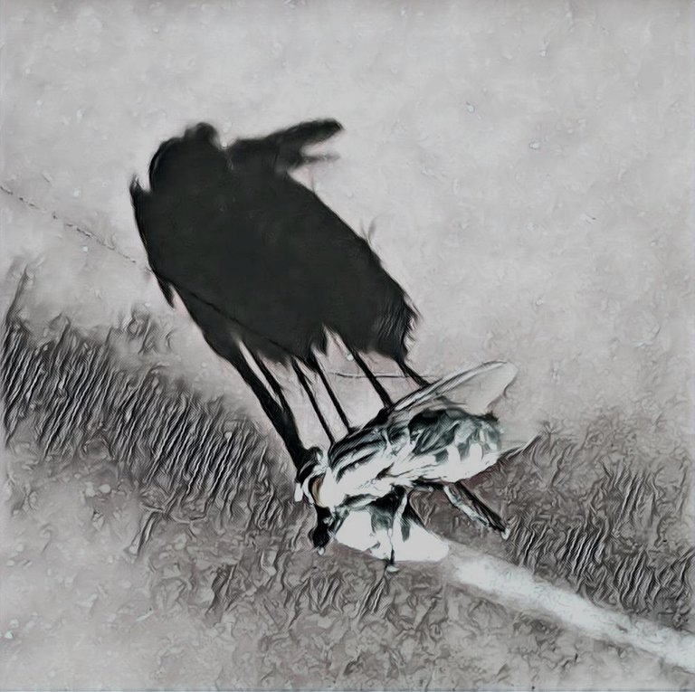shadowhunters12620214ok.jpg