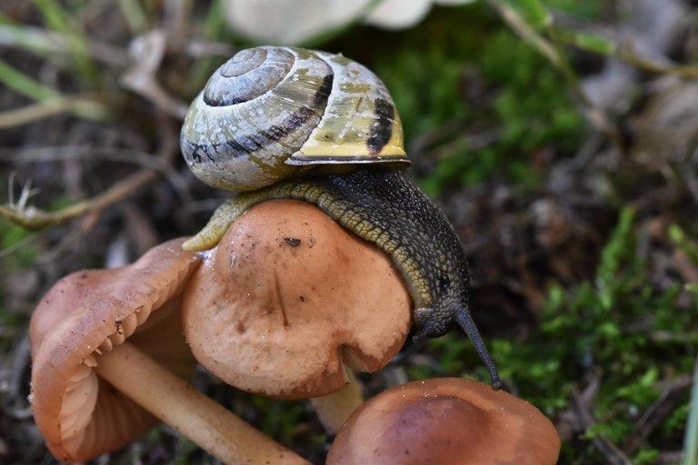 snail mushroom garden  4.jpg