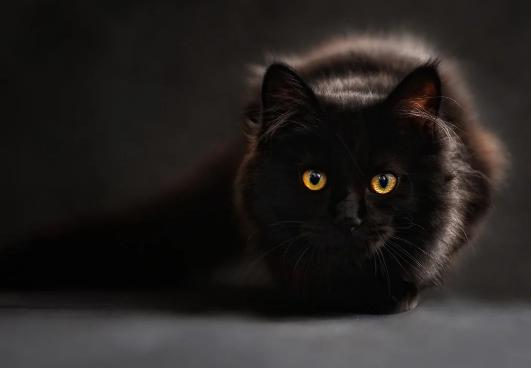 Así era mi gato negro. Imagen1
