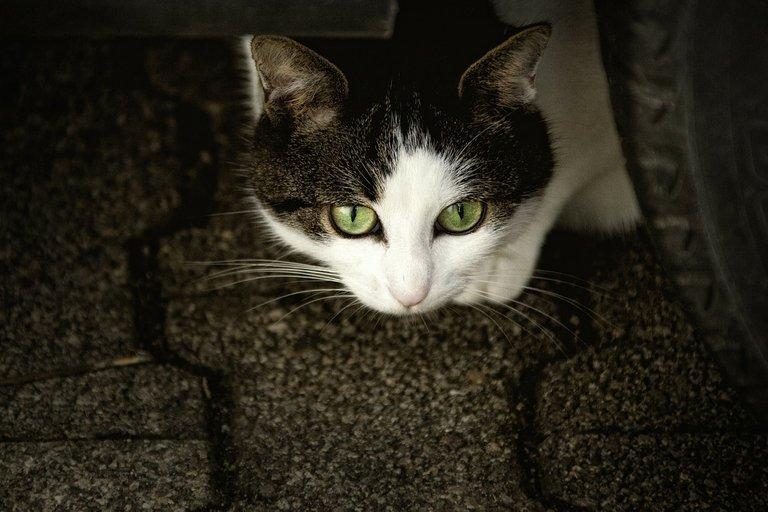 cat207583_1280.jpg