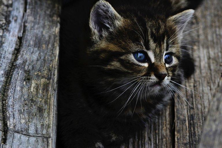 cat914110_1280.jpg