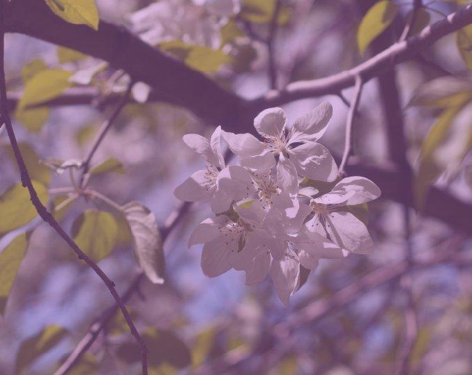 color_1_3.jpg