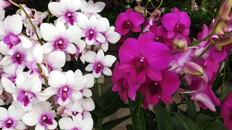 flower_4u.jpg