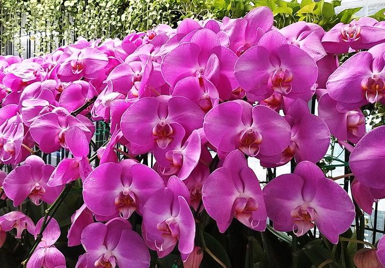 flower_7u.jpg