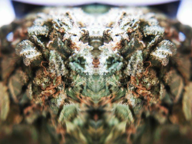 PicsArt_09-15-10.36.17.jpg