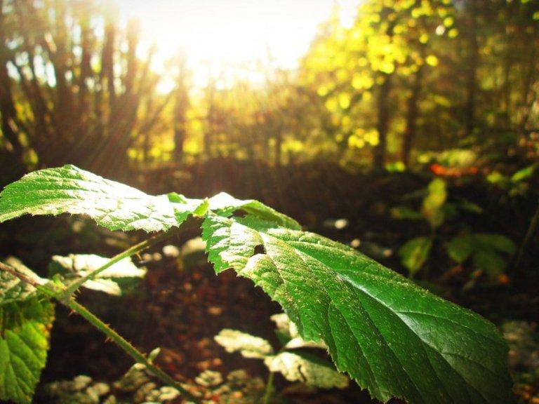 sheet_sun_forest_reflected_rays_nature_trees-914525.jpg!d.jpg