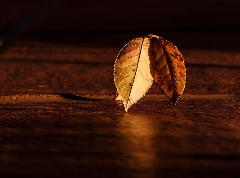 leaf-409258_1280.jpg