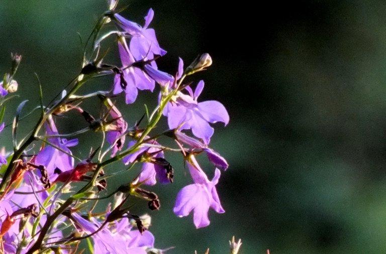 1081-PurpleSmall.jpg