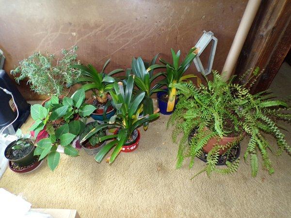 House plants crop July 2020.jpg