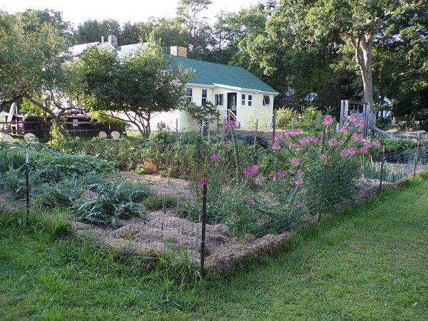 Big garden crop August 2020.jpg
