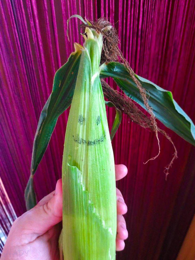 кукурудза 1.jpg