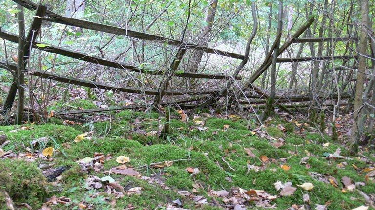 Pilzsuche im Ilsfelder Wald Okt 4.JPG