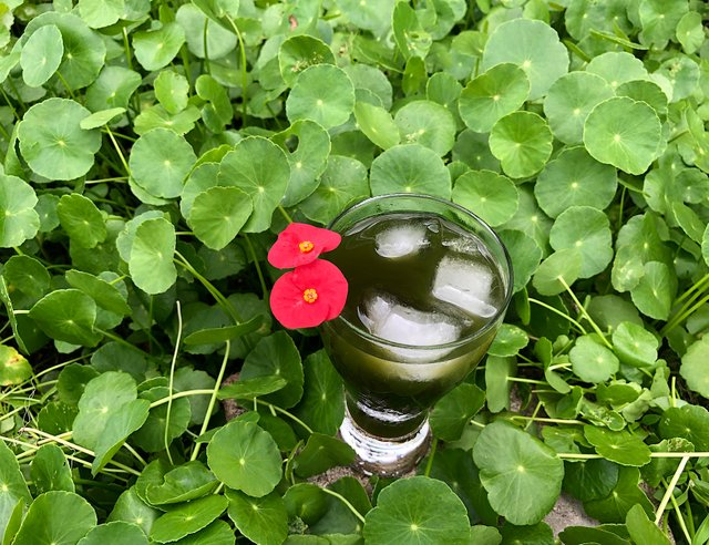 pennywort juice with ice