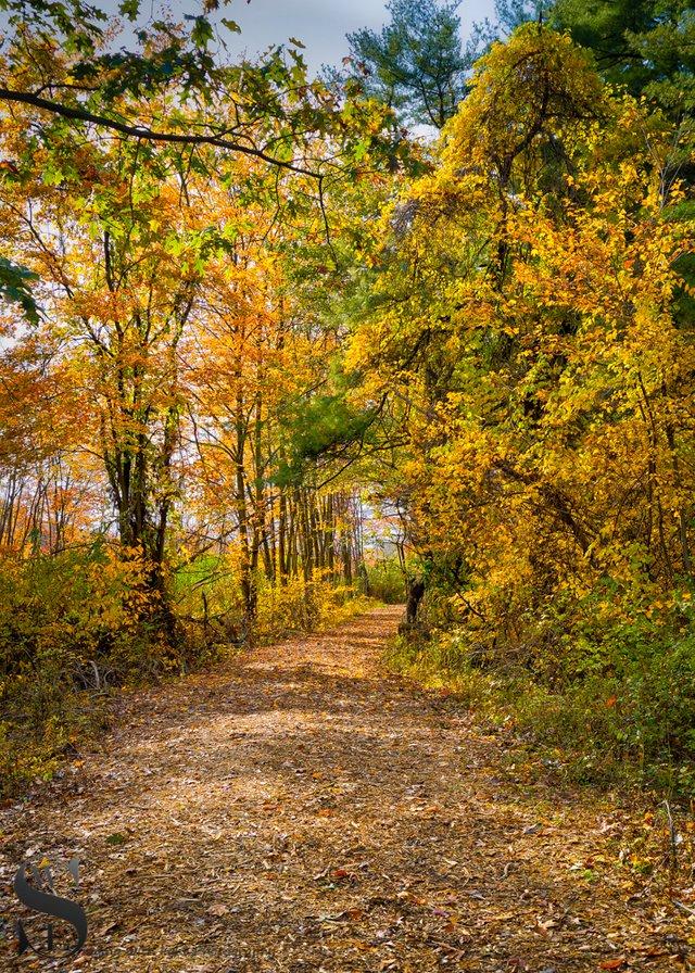 1 1 Trees Beaverbrook trail.jpg