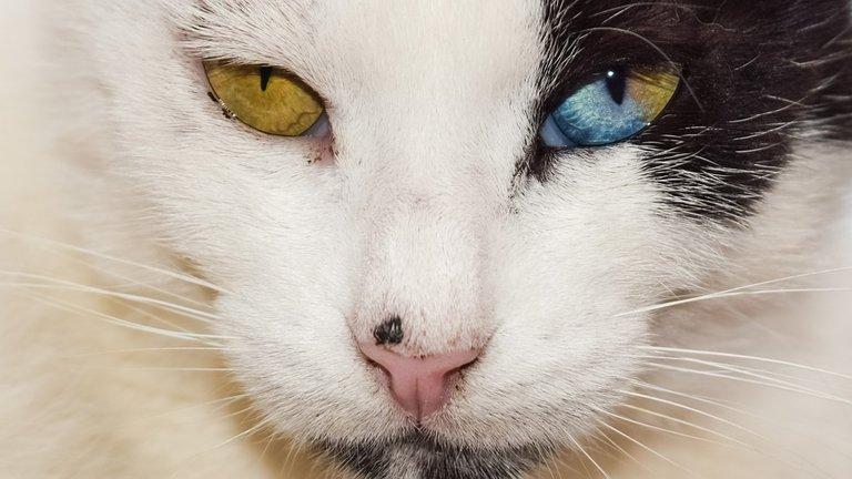 eyes_2344284_960_720.jpg