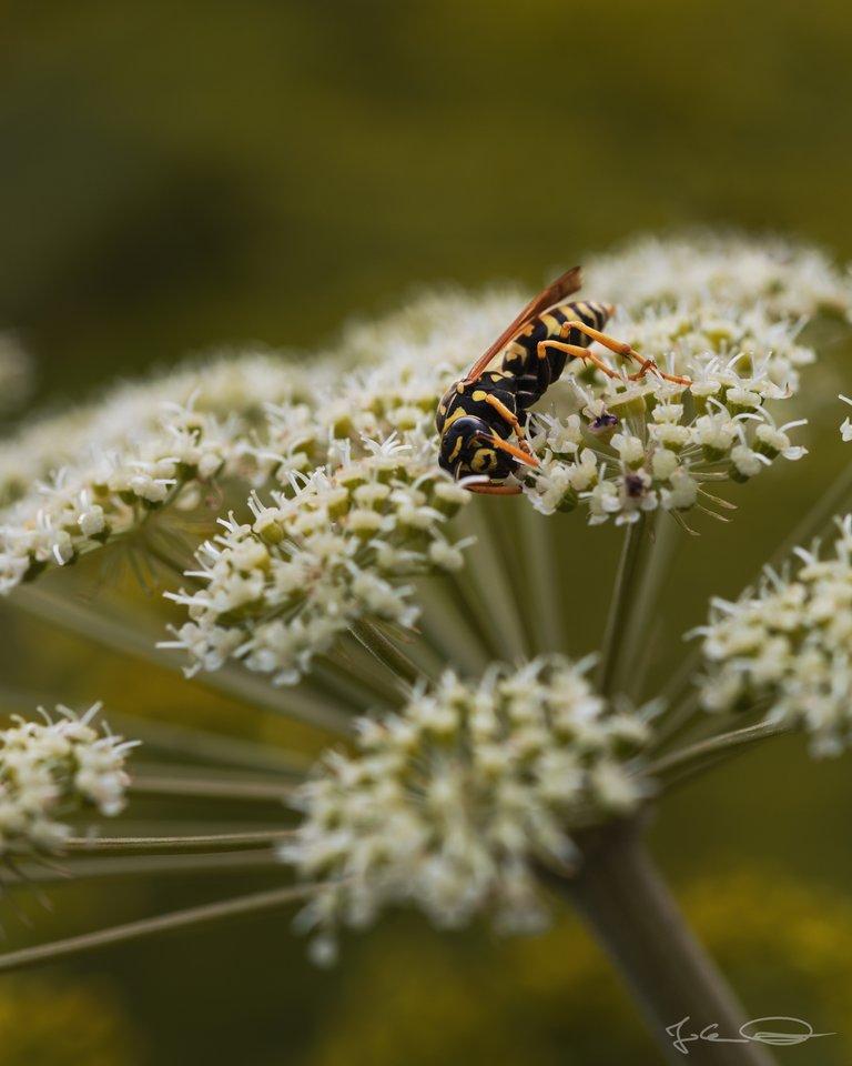 Hive AlphabetHunt Wasp