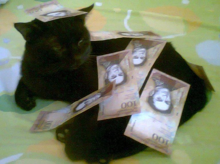 Gato negro dinero.jpg