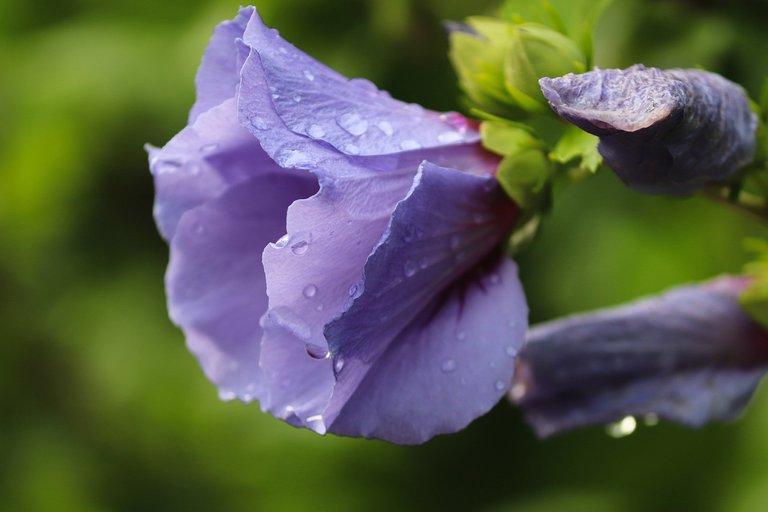 hibiscus-6568502_1280.jpg