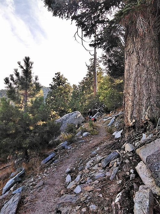 follow trail (2).jpg