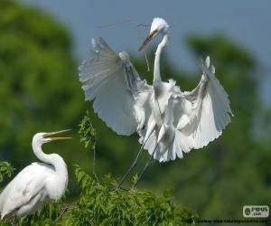Garzas haciendo nido