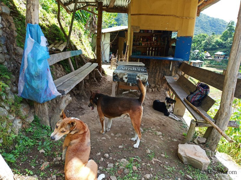 My guide dogs resting at the sari-sari store