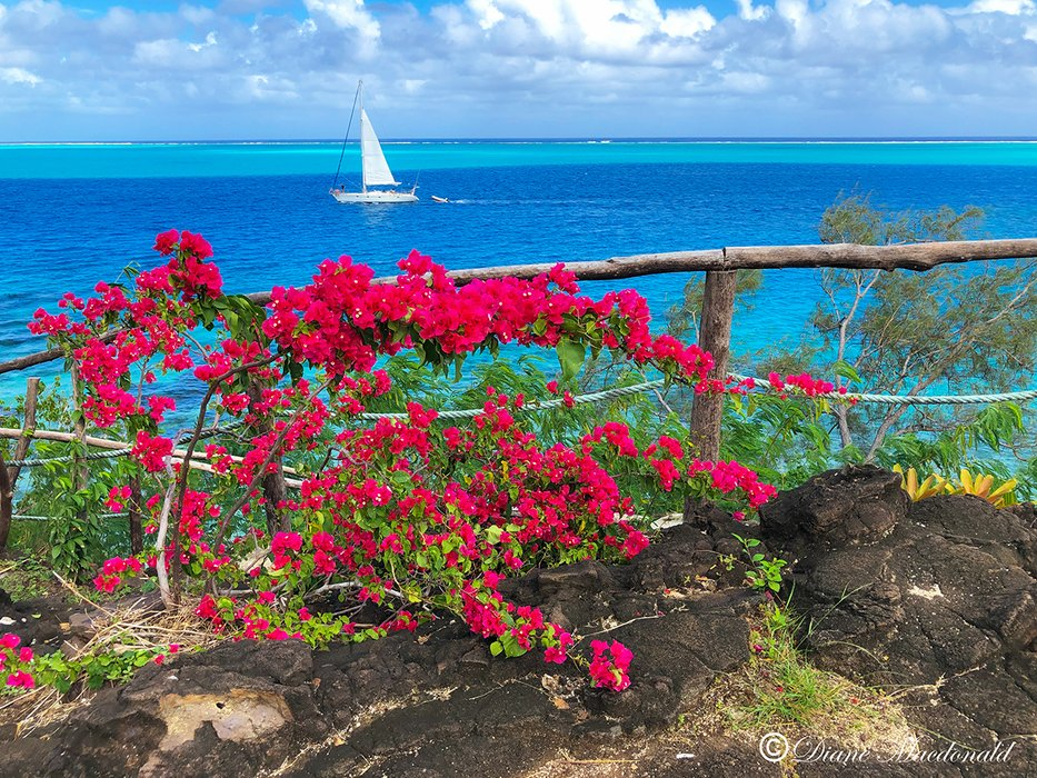 lookout point-3 huahine.jpg