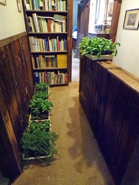 Seedlings on the move1 crop May 2020.jpg