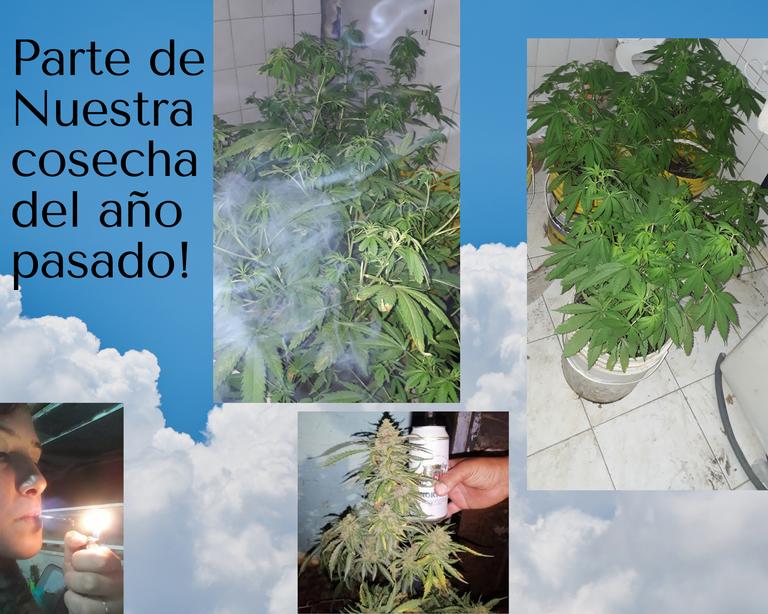 nuestra_cosecha_del_a_o_pasado_.png
