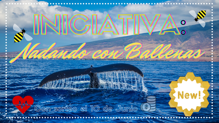 iniciativa_nadando_con_ballenas.png