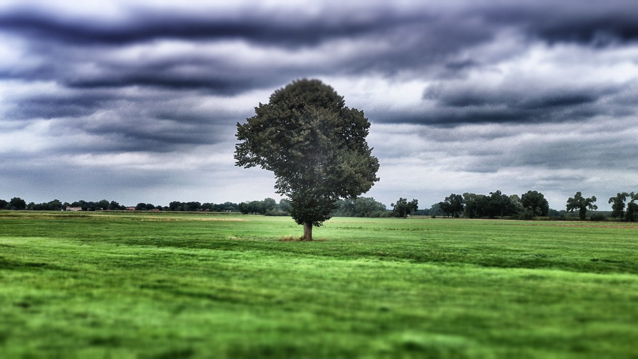 A lonely tree in the shire