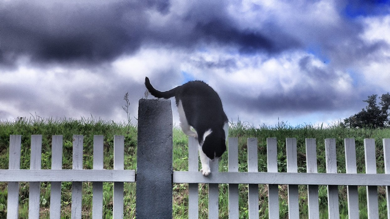 This cute little cat overcomes the fence