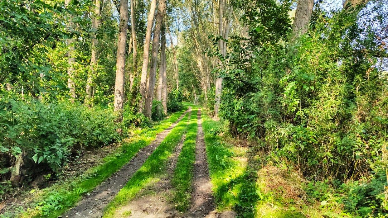 Untrodden paths at the former border.