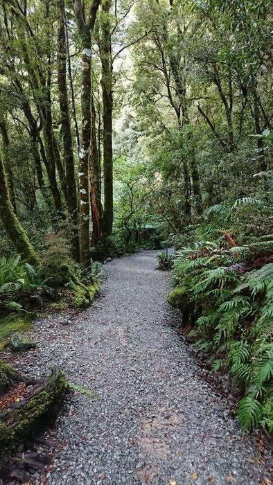See if you can hear the native birdsong as you walk through