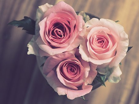 Rose, Flower, Petal, Love, Bouquet