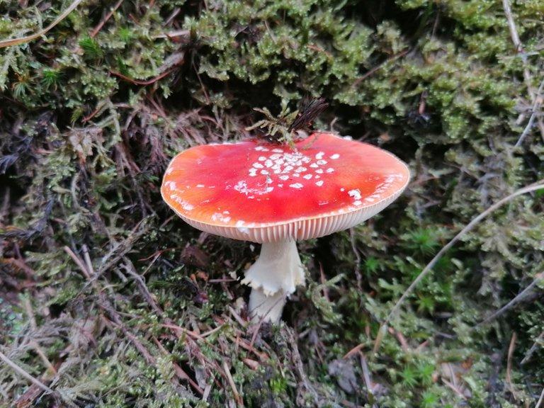Fungi01.jpg