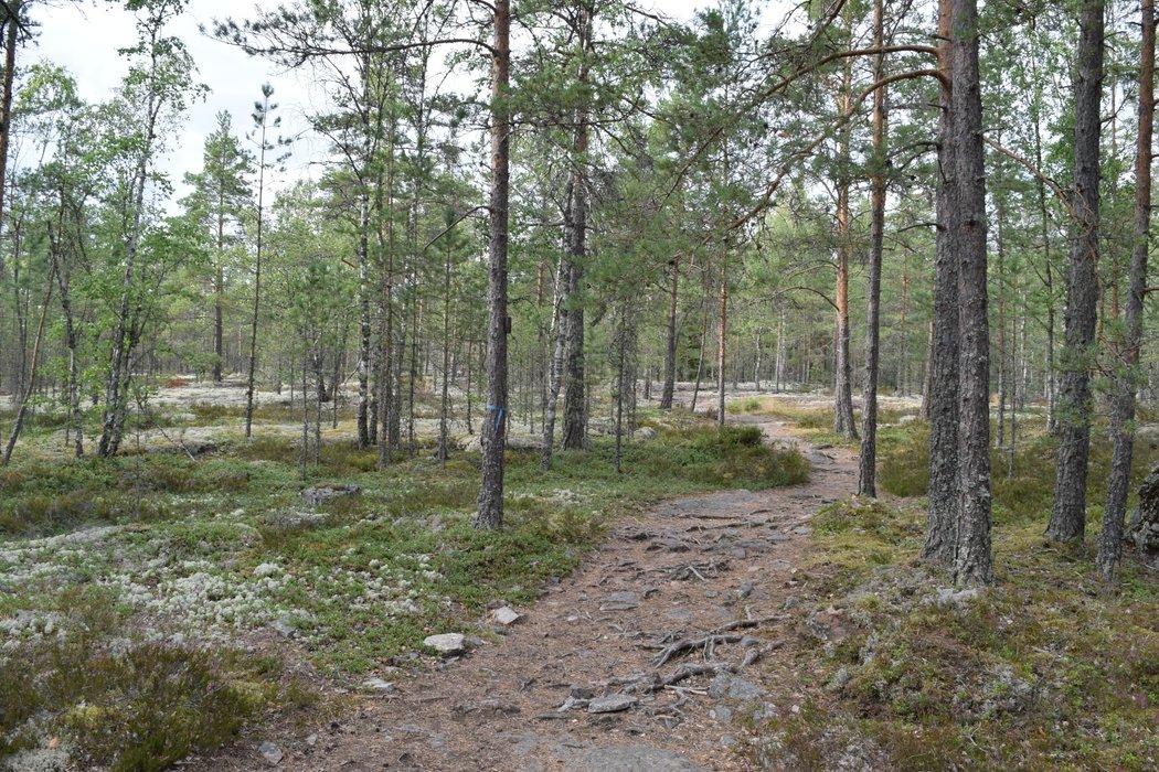 Rugged and creepy looking forest area in Sammallahdenmäki